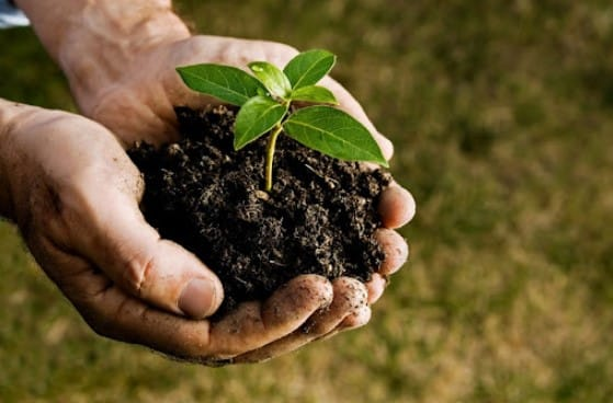 What are the Advantages of Using a Soil Test Kit?