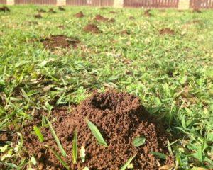 Best Ant Killer For Lawns