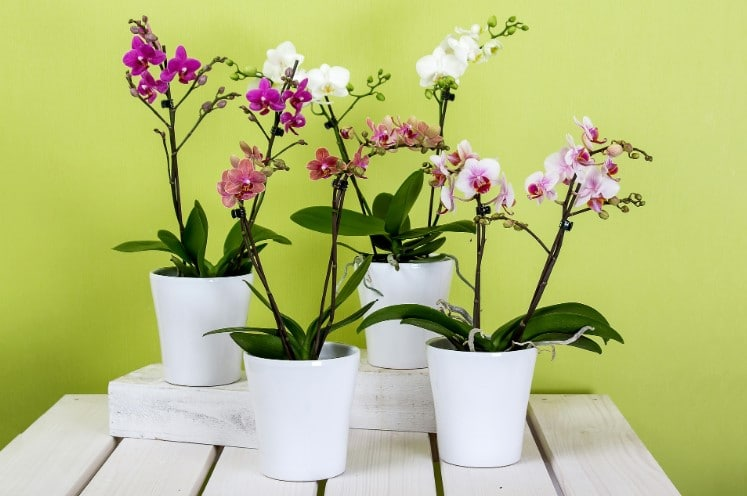 The Best Fertilizer For Orchids To Grow Healthy & Bloom