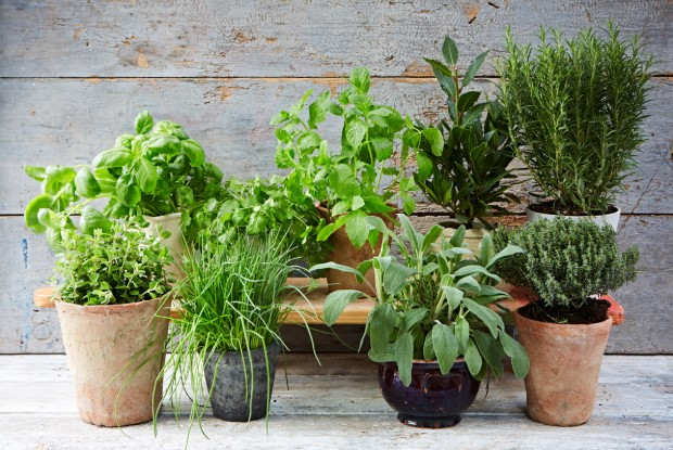 The Best Potting Soil For Herbs & Growing Tips