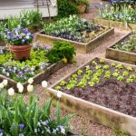 Best Soil for Raised Garden Beds