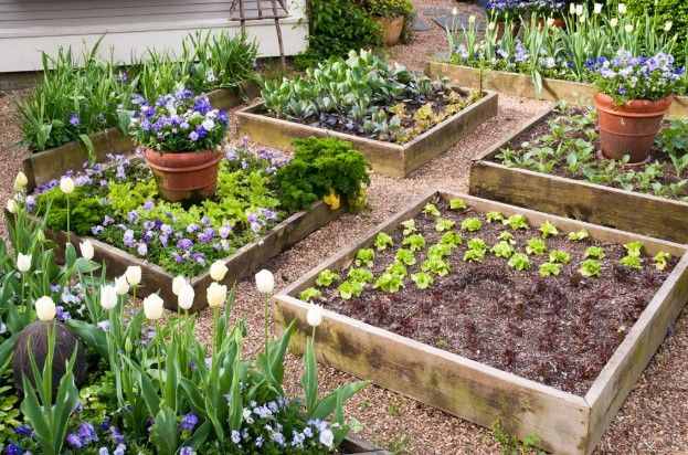 The Best Soil For Raised Vegetable Garden Beds