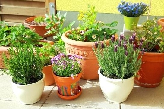 Choose the Right Pots for Herbs