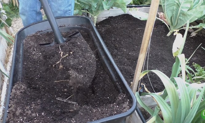 Preparing Soil for Raised Bed Vegetable Garden