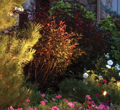 The Best Outdoor Solar Spotlights to Illuminate Your Garden & Yard