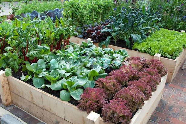 How Deep Should Raised Garden Beds Be?