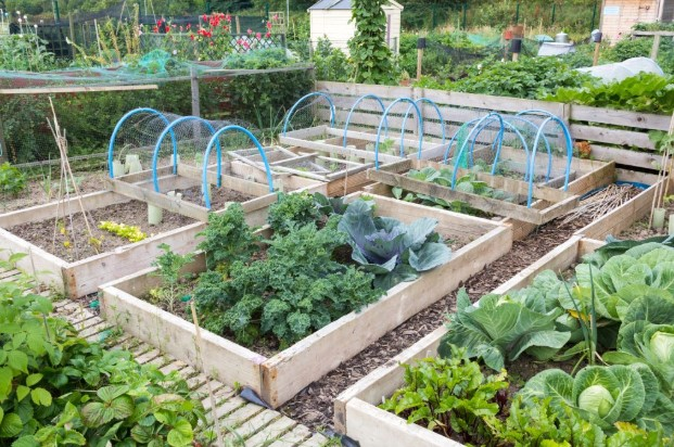 What is a Raised Garden Bed?
