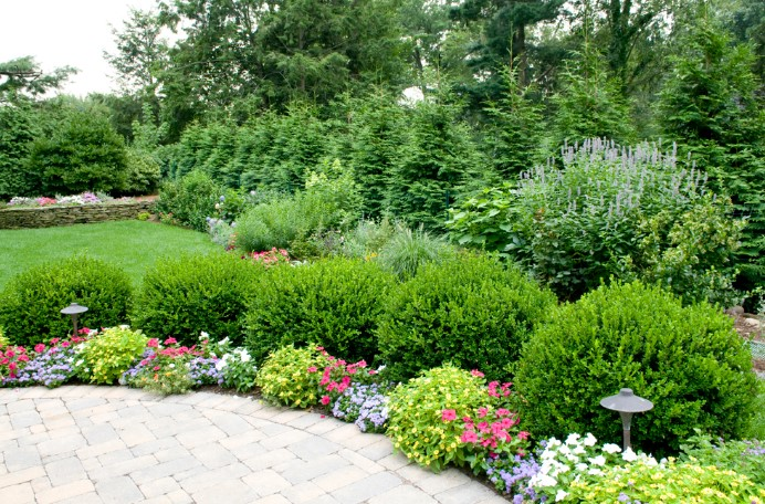 6 Best Fertilizer For Trees And Shrubs 2020 Guide Reviews
