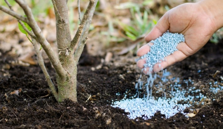 How to Fertilize Trees and Shrubs?