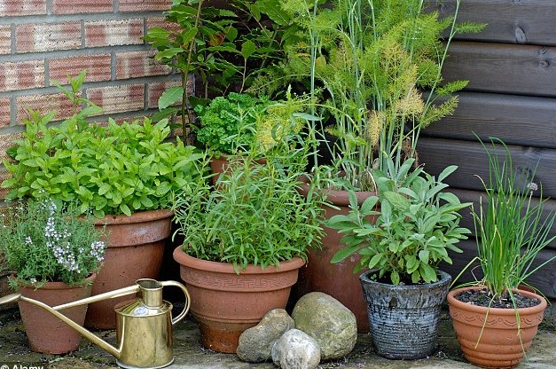 Choosing the right pots for herbs