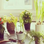Best Potting Soil for Indoor Plants