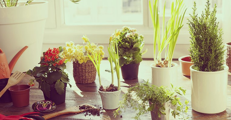 The Best Potting Soil For Indoor Plants - Choosing & Compare