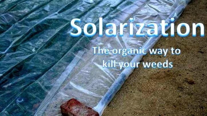 Using solarization to kill weeds