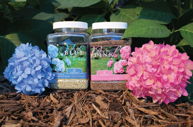 What is the Best Fertilizer for Hydrangeas?