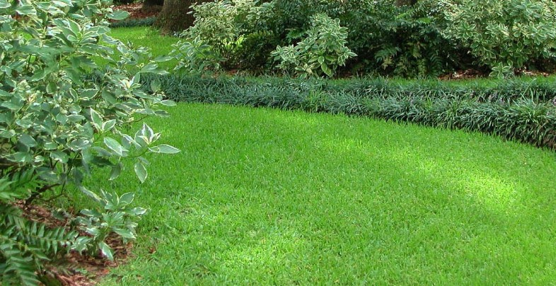 The Best Fertilizer For St. Augustine Grass