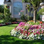Best-Fertilizer-for-Flowers