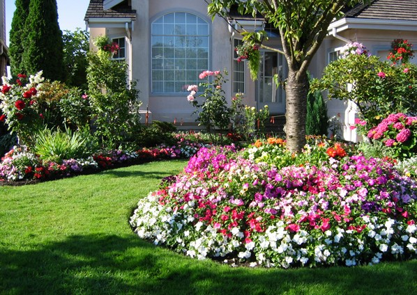 The Best Fertilizer For Flower Plants Growth & Blooms
