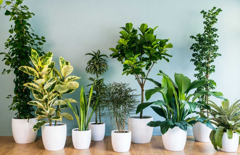 Best Fertilizer for Indoor Plants