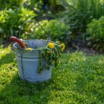 Best Organic Weed Killers for Garden and Lawn