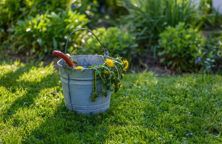 The Best Organic Weed Killers For Your Garden & Lawn