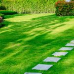 Best Fertilizer for Grass in Summer