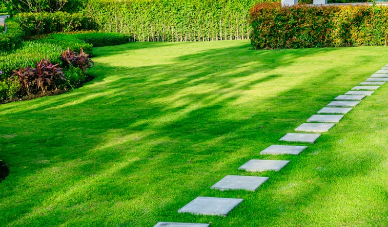 The Best Fertilizer For Grass in Summer & Hot Weather