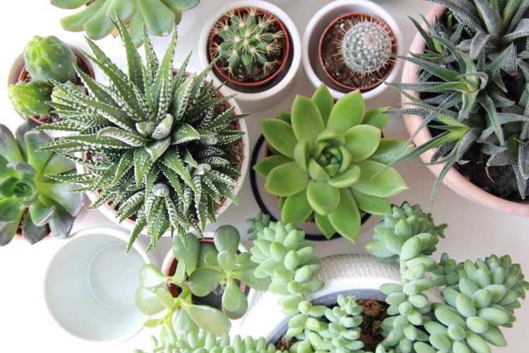 The Best Fertilizers For Your Succulent Plants