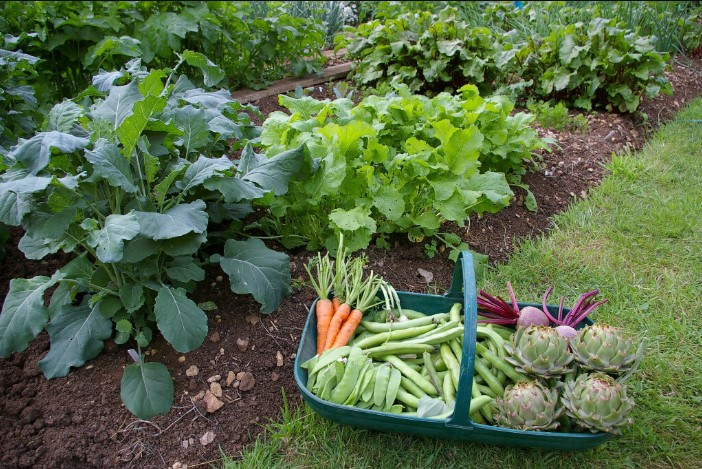 Best Fertilizer for Vegetable Garden