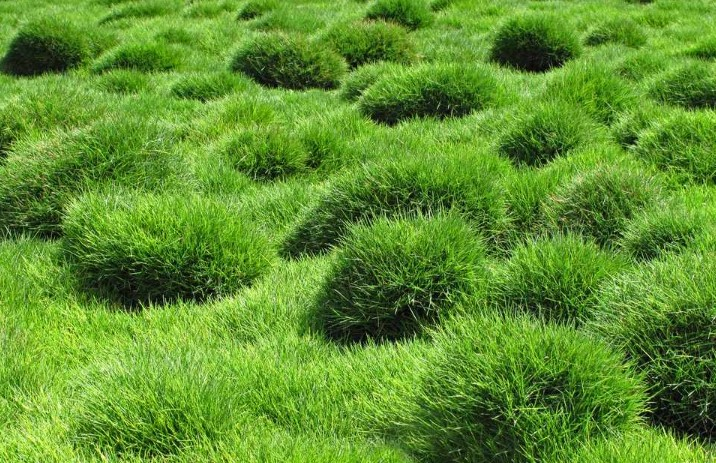 The Best Fertilizer For Your Zoysia Grass Lawn