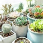 Best Pots for Succulents