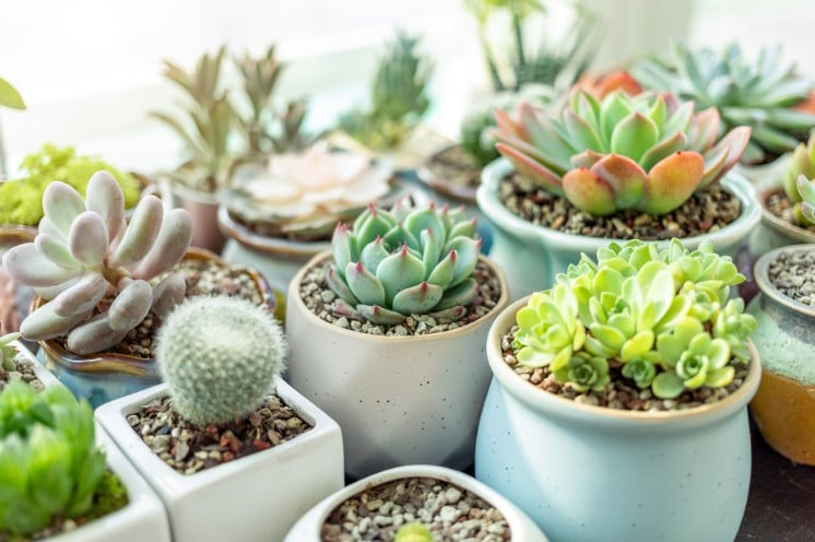 The Best Pots For Succulent Plants Indoor & Outdoor