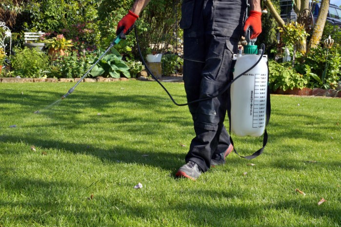 The Best Pre Emergent Herbicide To Prevent Lawn's Weeds
