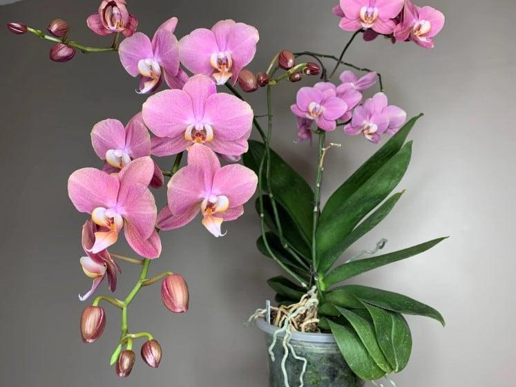 Best Potting Mix for Orchids