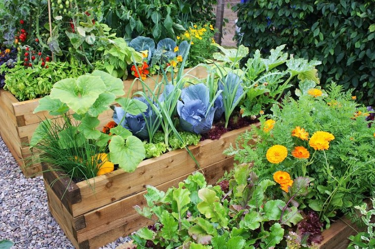 The Best Raised Garden Beds For Vegetables & Plants