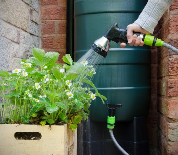 Using a rain barrel to water garden