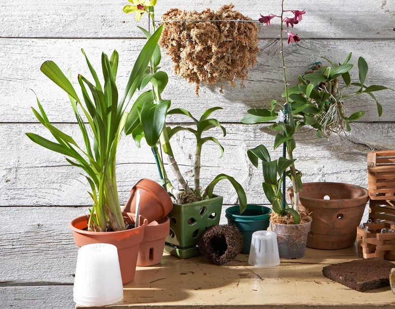 The Best Orchid Pots - Types, Size, Material, Drainage