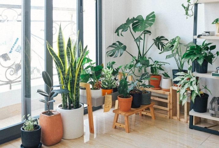 The Best Pots for Indoor Plants - Types, Size, Material & Drainage