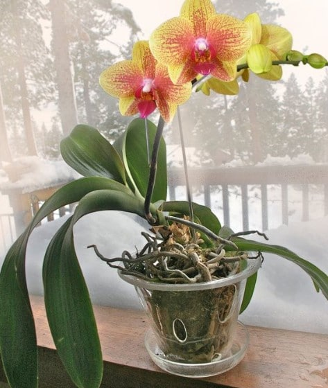 Selecting a Pot for Your Orchid