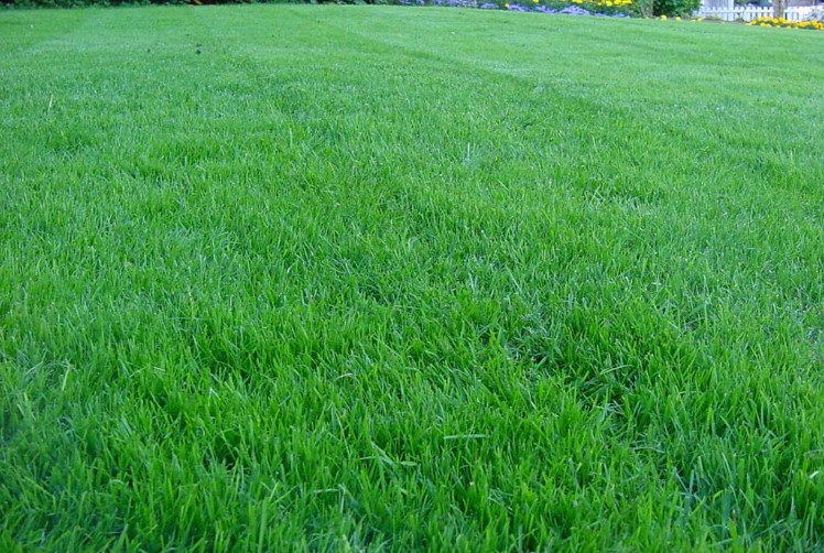The Best Fertilizer For Thick and Healthy Green Grass