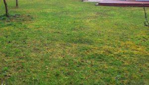 Best Moss Killer for Lawns