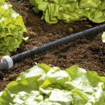 Best Soaker Hose for Gardens, Vegetables, & Trees