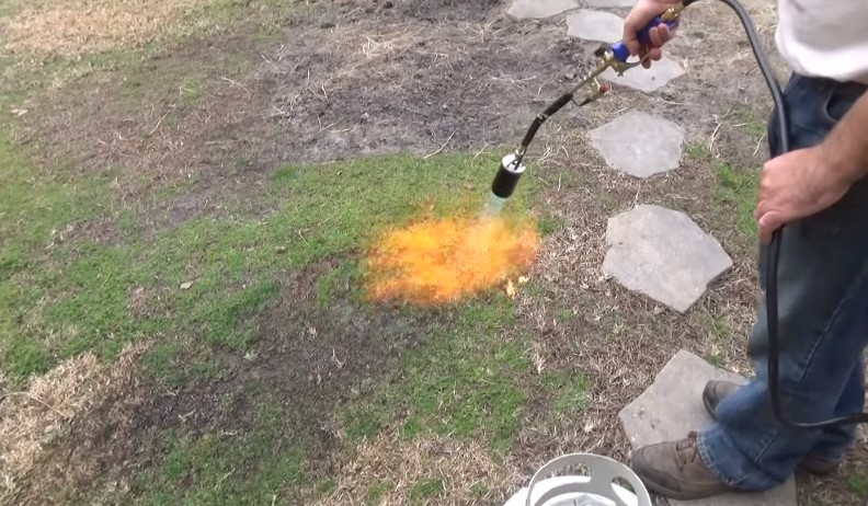 How to Use a Torch to Burn Weeds?