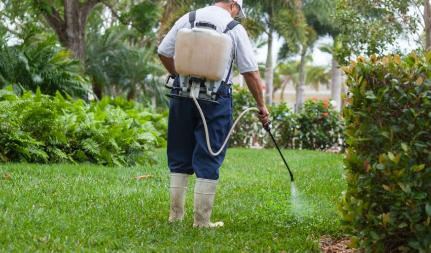 The Best Backpack Sprayer For Your Lawn, Garden & Weed Killer
