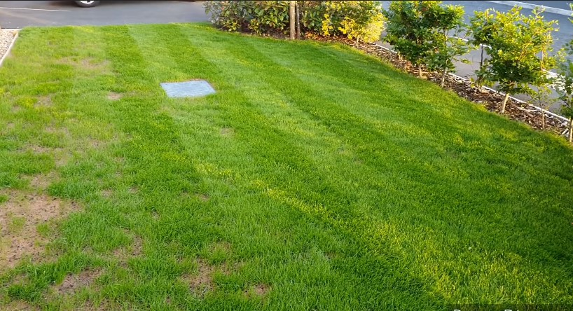 The Best Fertilizer For New Grass & Starting a New Lawn