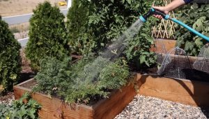 Best Garden Hose Nozzle for Watering Plants