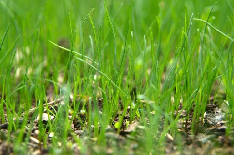 How to Fertilize New Grass?