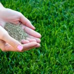 Best Bermuda Grass Seed