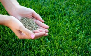 Best Bermuda Grass Seed