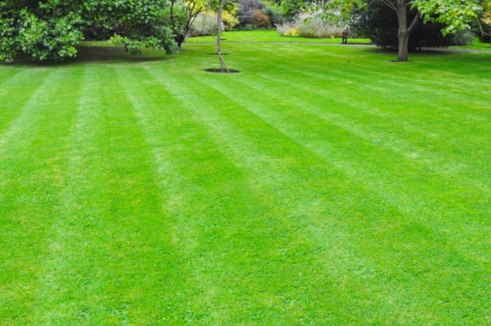Best Time to Fertilize Lawn Before or After Rain