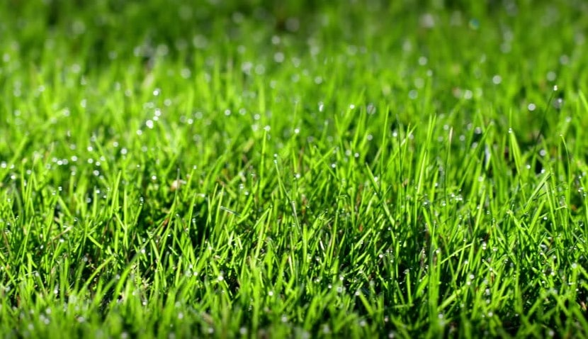 How to Fertilize Your Lawn After Rain